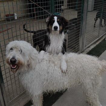The Bone Backyard Big Dog Gallery   Dog Boarding Orange ...
