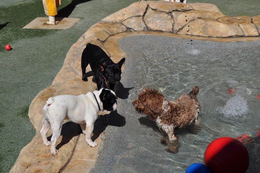 Small Dogs Photos at Bone Backyard   Orange County Small ...