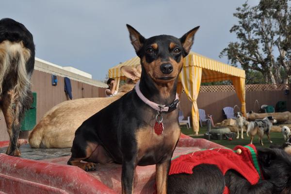 Bone Backyard Dog Daycare   Dog Boarding Orange County ...