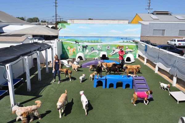 Big Backyard Daycare : The famous Bone Adventure Blue Room! This is an indoor area where big