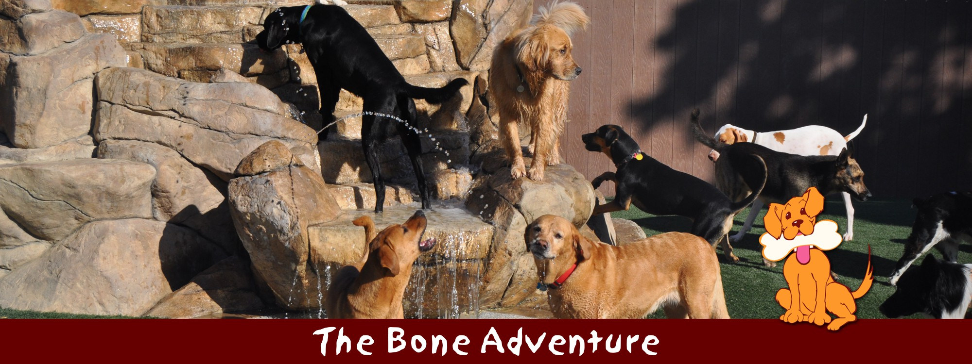 The Bone Adventure   Orange County Dog Daycare, Boarding ...
